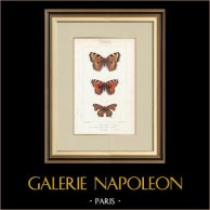 Papillons d'Europe - Grande Tortue - Petite Tortue - Gamma