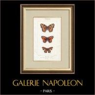 Motyle z Europy - Grande Tortue - Petite Tortue - Gamma