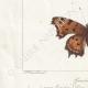 DETTAGLI 03   Farfalle dall'Europa - Grande Tortue - Petite Tortue - Gamma