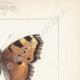 DETTAGLI 04   Farfalle dall'Europa - Grande Tortue - Petite Tortue - Gamma