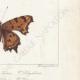 DETTAGLI 06   Farfalle dall'Europa - Grande Tortue - Petite Tortue - Gamma