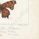 DETTAGLI 08   Farfalle dall'Europa - Grande Tortue - Petite Tortue - Gamma