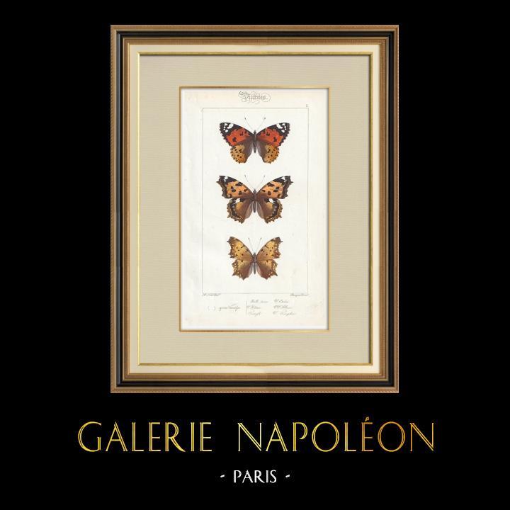 Stampe Antiche & Disegni | Farfalle dall'Europa - Belle Dame - Triangle - V. Blanc | Stampa calcografica | 1834