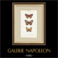 Papillons d'Europe - Belle Dame - Triangle - V. Blanc