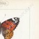 DETTAGLI 04 | Farfalle dall'Europa - Belle Dame - Triangle - V. Blanc
