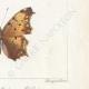 DETTAGLI 06   Farfalle dall'Europa - Belle Dame - Triangle - V. Blanc