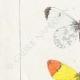 DETTAGLI 02 | Farfalle dall'Europa - Piéride