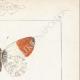DETTAGLI 04 | Farfalle dall'Europa - Piéride