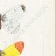 DETTAGLI 05 | Farfalle dall'Europa - Piéride