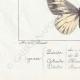 DETTAGLI 07 | Farfalle dall'Europa - Pieride - Coliade - Piéride