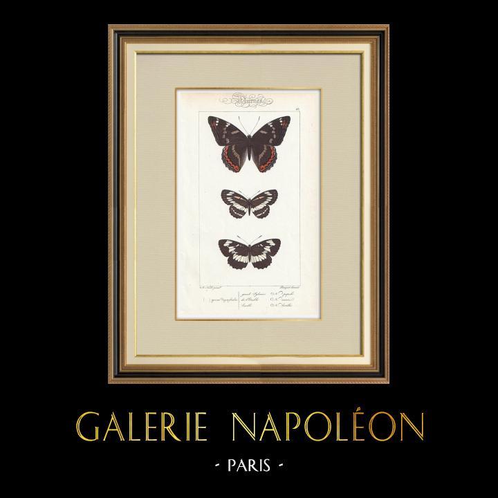 Stampe Antiche & Disegni | Farfalle dall'Europa - Grand Sylvain - Lucille | Stampa calcografica | 1834
