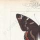 DETTAGLI 01 | Farfalle dall'Europa - Grand Sylvain - Lucille