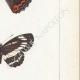 DETTAGLI 05 | Farfalle dall'Europa - Grand Sylvain - Lucille