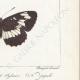 DETTAGLI 06 | Farfalle dall'Europa - Grand Sylvain - Lucille