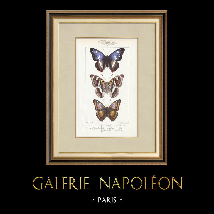 Stampe Antiche & Disegni | Farfalle dall'Europa - Grand Mars - Petit Mars | Stampa calcografica | 1834