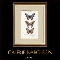 Motyle z Europy - Grand Mars - Petit Mars