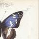 DETALLES 04 | Mariposas Europeas - Grand Mars - Petit Mars