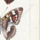 DETTAGLI 05 | Farfalle dall'Europa - Grand Mars - Petit Mars