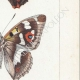 DETALLES 05 | Mariposas Europeas - Grand Mars - Petit Mars