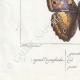 DETTAGLI 07 | Farfalle dall'Europa - Grand Mars - Petit Mars