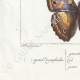 DETALLES 07 | Mariposas Europeas - Grand Mars - Petit Mars
