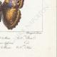 DETALLES 08 | Mariposas Europeas - Grand Mars - Petit Mars