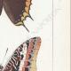 DETTAGLI 05 | Farfalle dall'Europa - Jasius