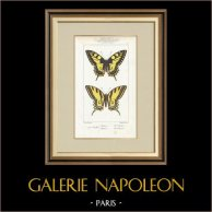 Butterflies of Europe - Machaon - Alexanor
