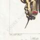 DETAILS 03 | Butterflies of Europe - Flambé - Ajax