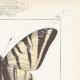 DETAILS 04 | Butterflies of Europe - Flambé - Ajax