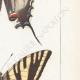 DETAILS 05 | Butterflies of Europe - Flambé - Ajax