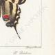 DETAILS 06 | Butterflies of Europe - Flambé - Ajax