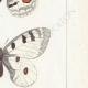 DETAILS 05 | Butterflies of Europe - Apollon - Phoebus - Semi-Apollon