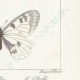 DETAILS 06 | Butterflies of Europe - Apollon - Phoebus - Semi-Apollon
