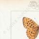 DETAILS 01 | Butterflies of Europe - Grande Violette - Petite Violette