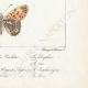 DETAILS 08 | Butterflies of Europe - Grande Violette - Petite Violette