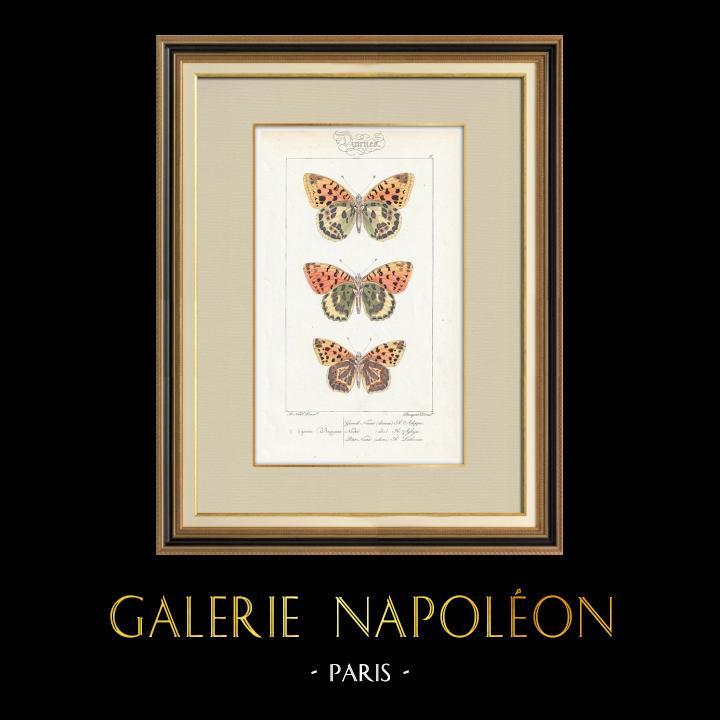 Antique Prints & Drawings | Butterflies of Europe - Grand Nacré - Petit Nacré | Intaglio print | 1834