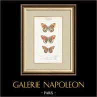 Schmetterlinge aus Europa - Grand Nacré - Petit Nacré