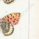 DETTAGLI 05 | Farfalle dall'Europa - Grand Nacré - Petit Nacré
