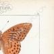 DETAILS 04 | Butterflies of Europe - Tabac d'Espagne - Valaisien - Chiffre