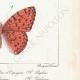 DETAILS 06 | Butterflies of Europe - Tabac d'Espagne - Valaisien - Chiffre