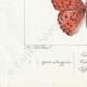 DETAILS 07 | Butterflies of Europe - Tabac d'Espagne - Valaisien - Chiffre