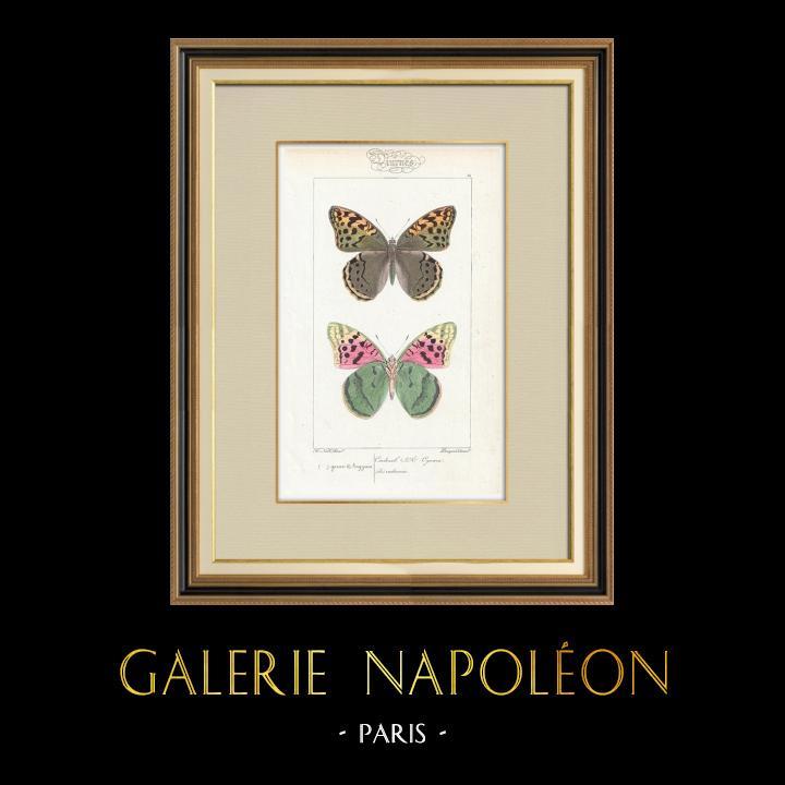Stampe Antiche & Disegni | Farfalle dall'Europa - Cardinal | Stampa calcografica | 1834