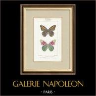 Butterflies of Europe - Cardinal