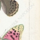 DETTAGLI 05 | Farfalle dall'Europa - Cardinal