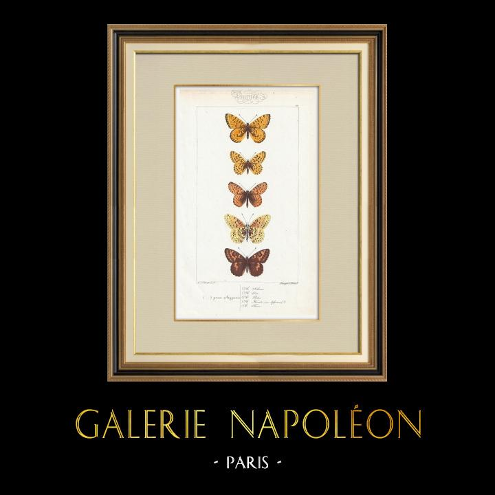 Antique Prints & Drawings | Butterflies of Europe - Argynnis | Intaglio print | 1834