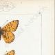 DETAILS 04 | Butterflies of Europe - Argynnis