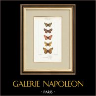 Motyle z Europy - Melitée