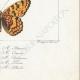 DETAILS 08 | Butterflies of Europe - Melitée