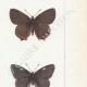 DETAILS 05 | Butterflies of Europe - Polyommate